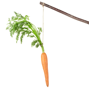 Carrot on a stick isolated on white