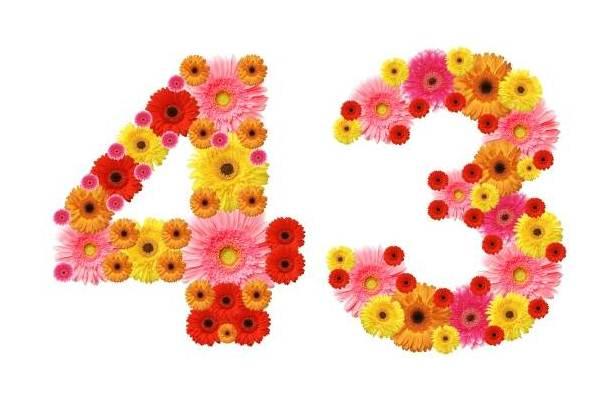 daisy 43 2